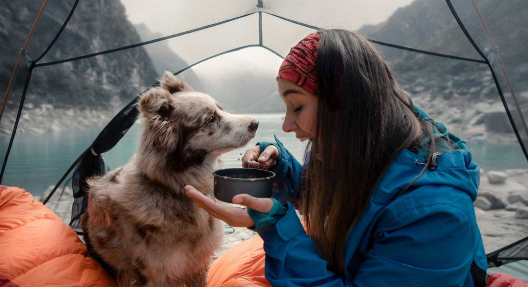 Make-Your-Camping-Enjoyable-With-Your-Pet-Dog-on-intelligentking