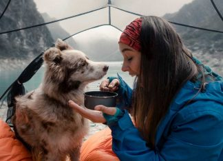 Make-Your-Camping-Enjoyable-With-Your-Pet-Dog-on-intelligentking